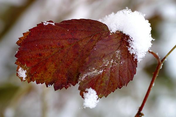 Snow - 34 - Snow