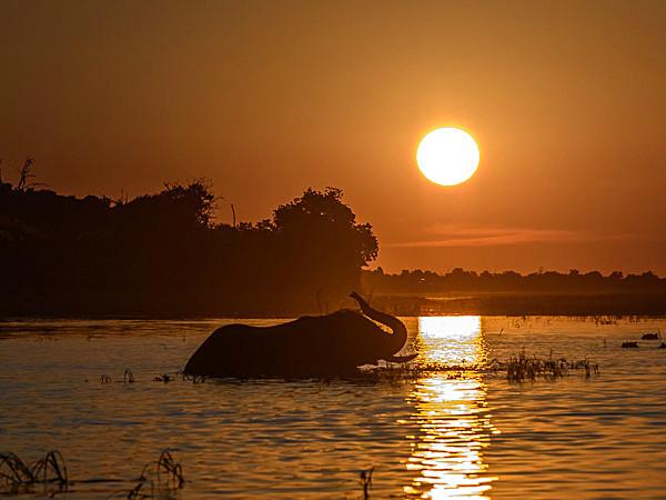 _DSC1719-2 - Chobe Botswana