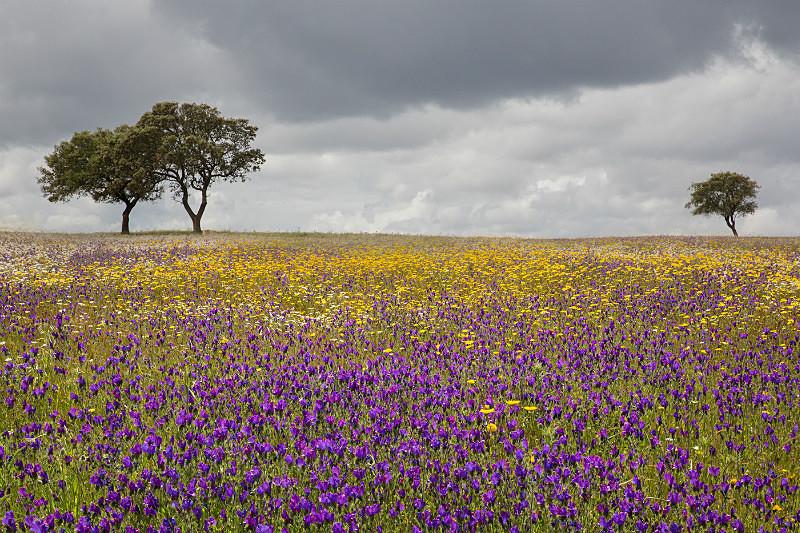 Pastures, The Alentejo. - European Landscape