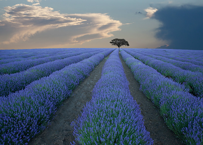 Tree  Provence - European Landscape
