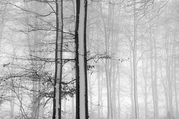 Trees in snow 1 - Monochrome Landscape Europe