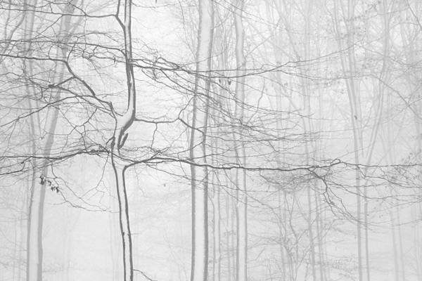 Trees in snow 2. - Monochrome Landscape Europe