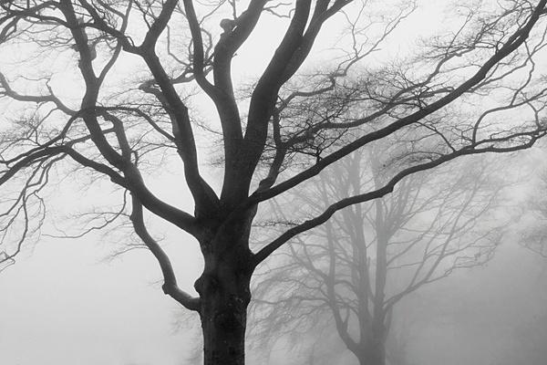 Trees in mist. - Monochrome Landscape Europe