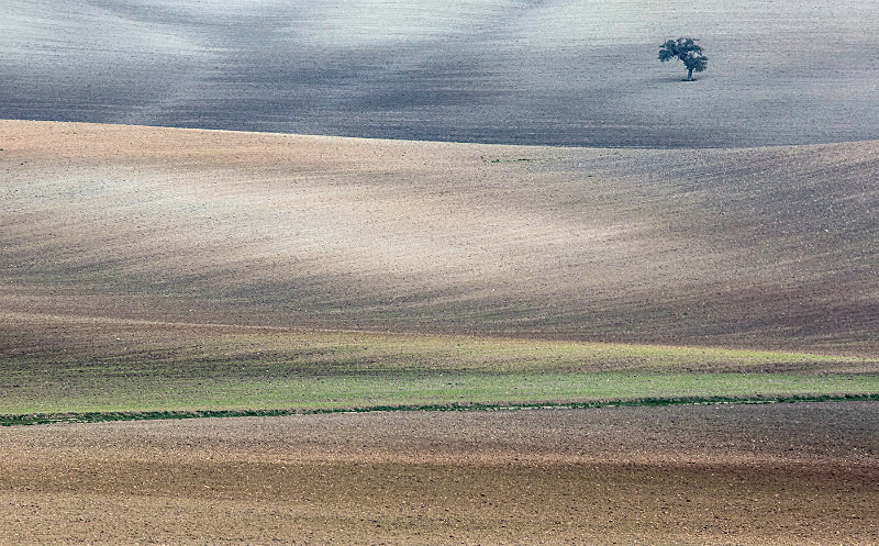 Empty fields; Andalusia. - European Landscape