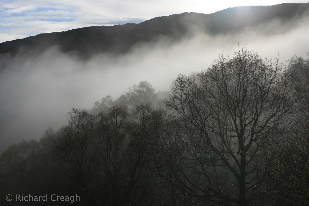 Tree's Breath - Ireland