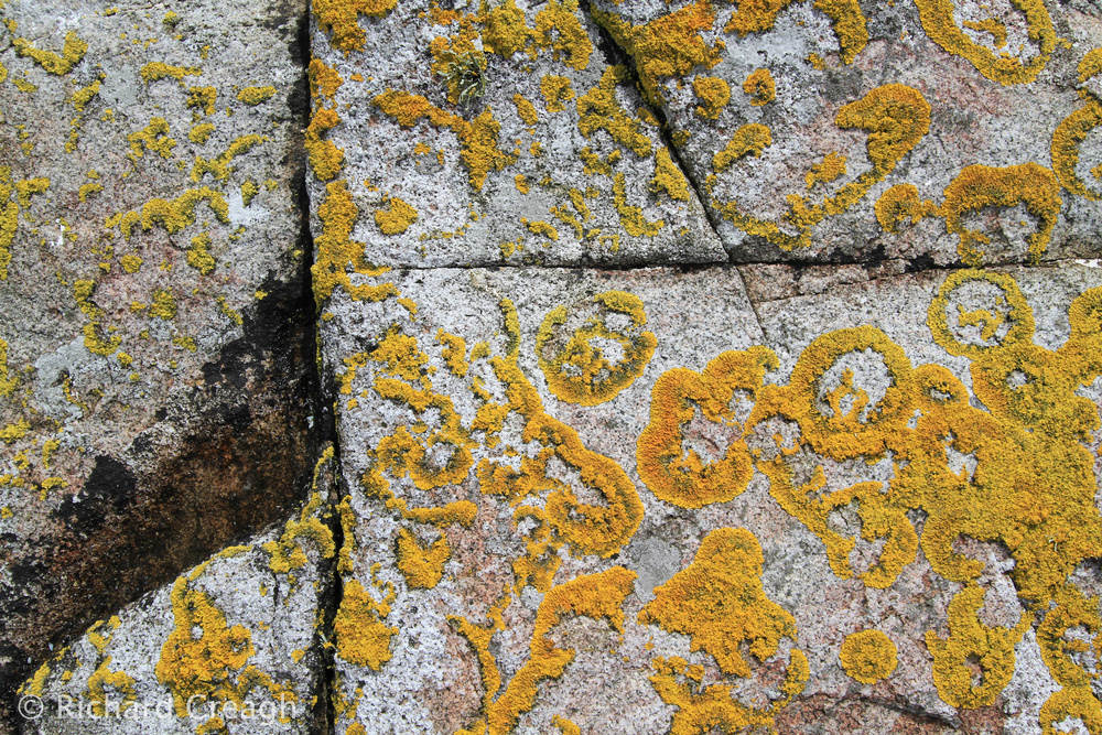 Carna Granite & Lichen - Detail