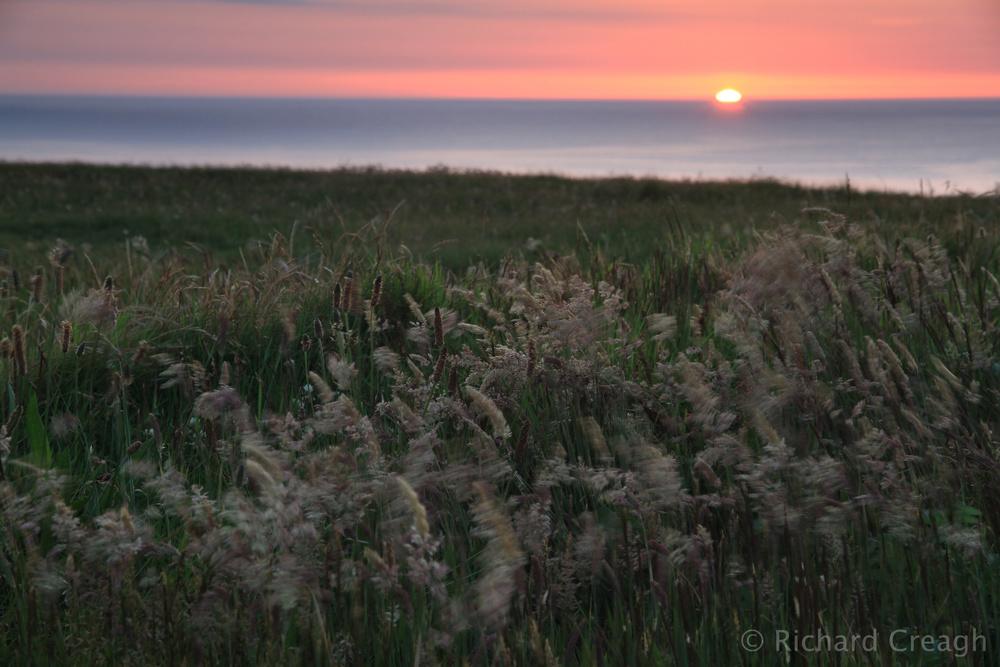 Sunset, Grasses - Detail