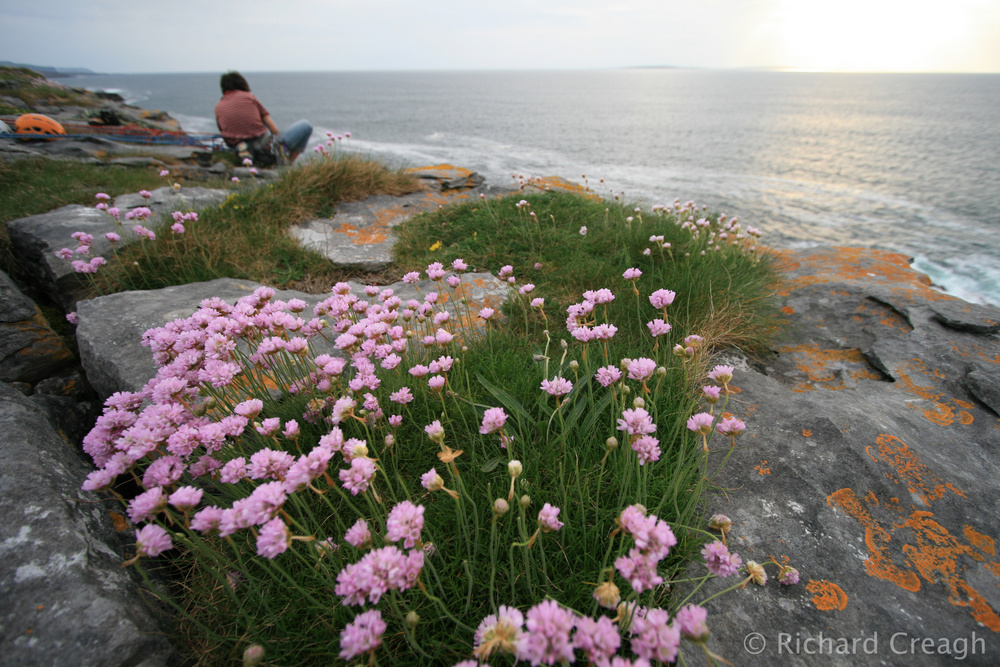 Sea Thrift Belay - Adventure
