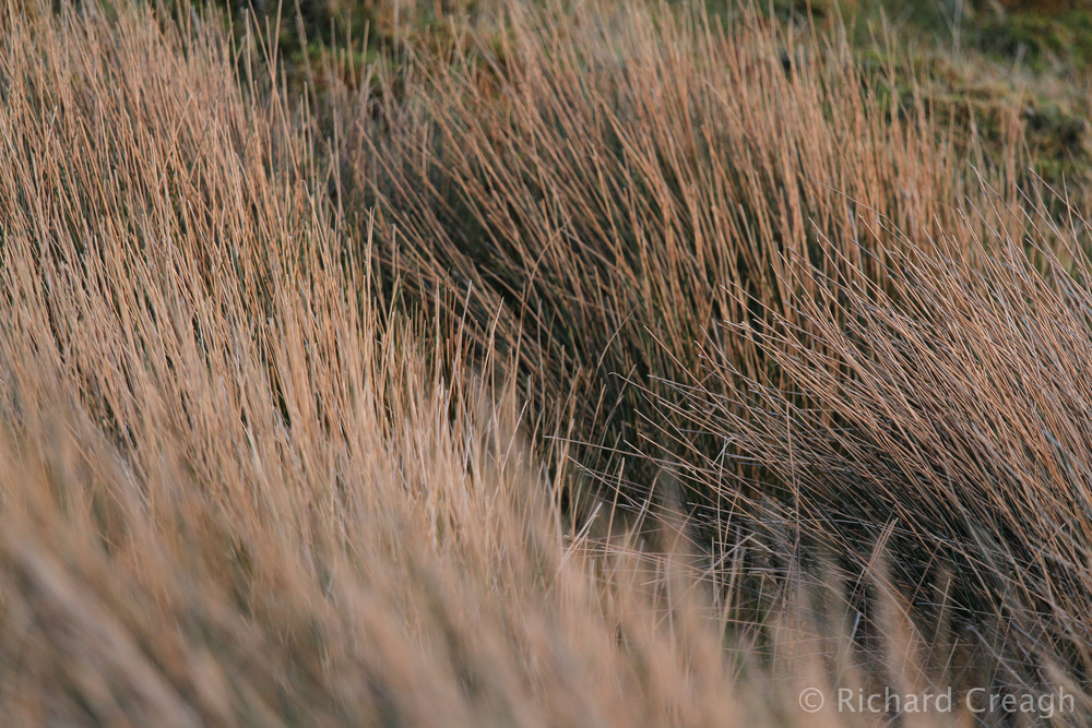 Rushes - Detail