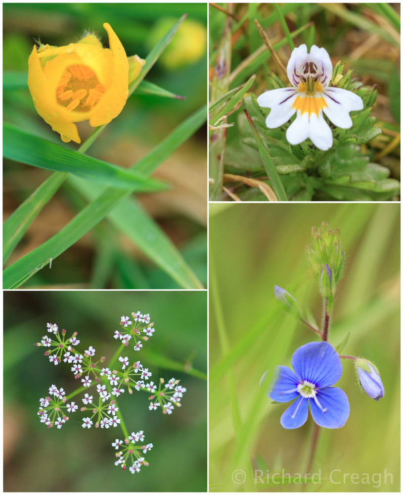 May Wildflowers - Wild