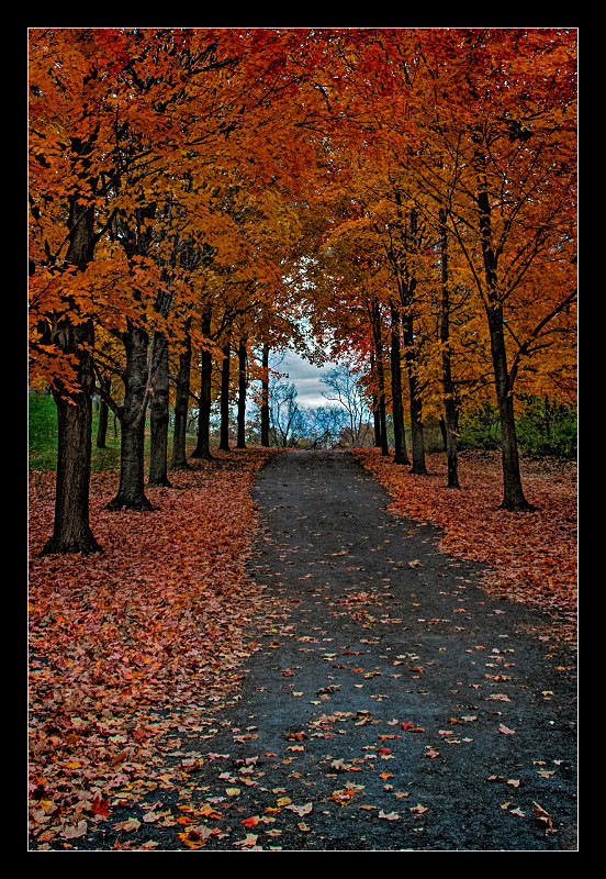 Country Lane - Landscapes