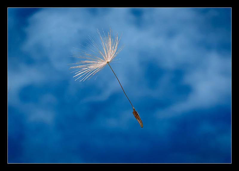 Wish - Nature