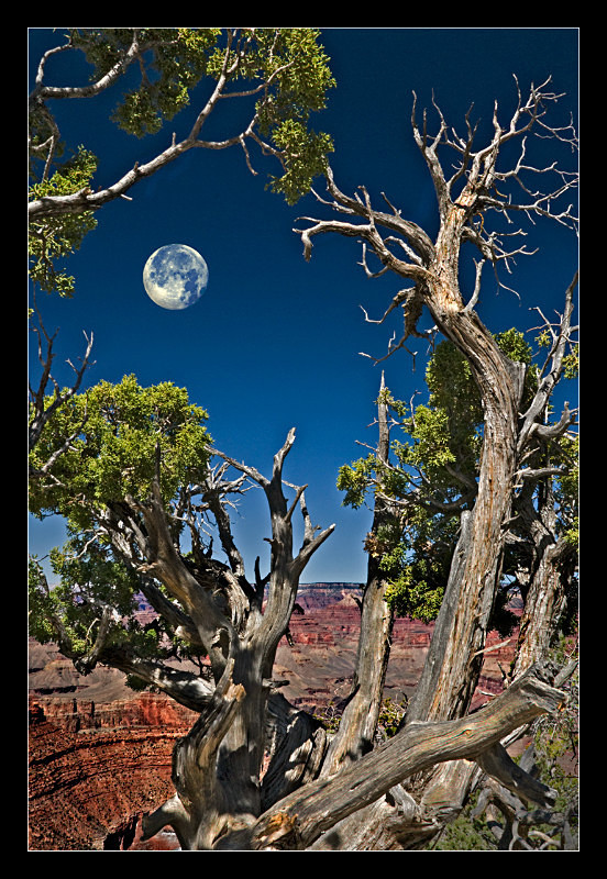 Grand Canyon Moonrise - Landscapes