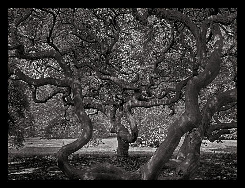 Tree of Life - Nature