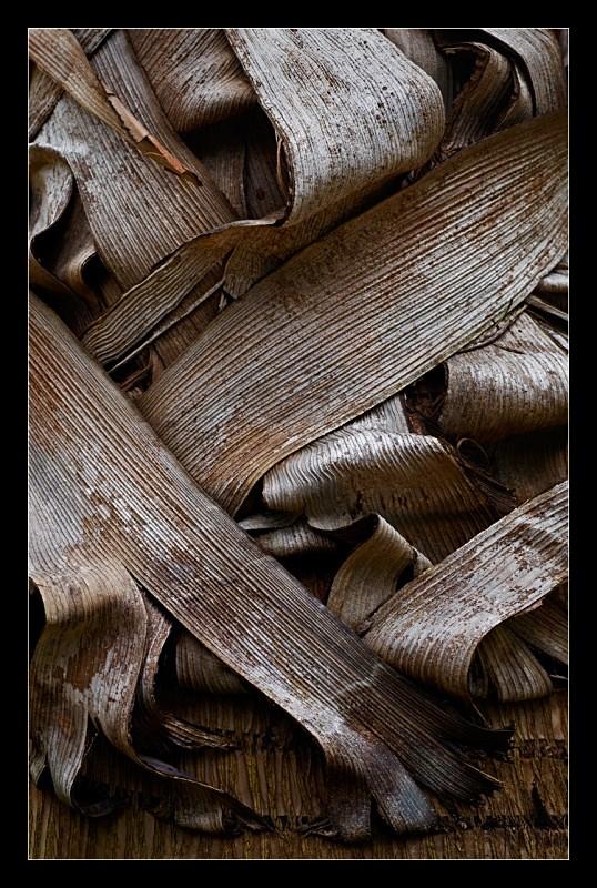 Paper Bark - Nature