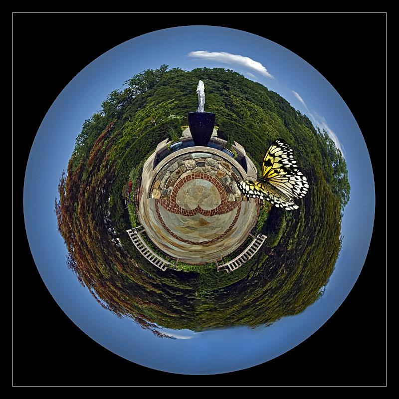 Chasing Butterflies - Nature
