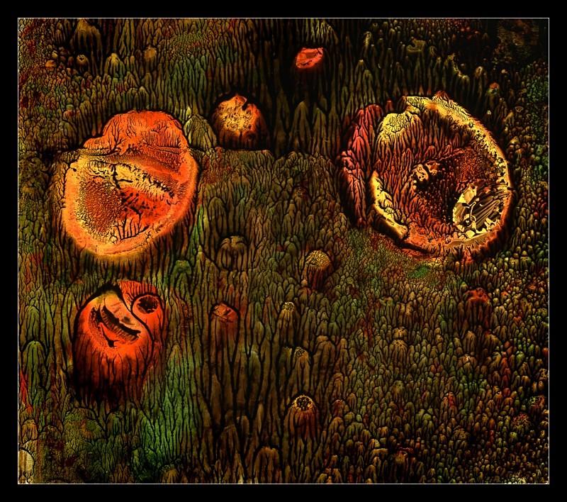 Forest Garden - Cliché Verre Images