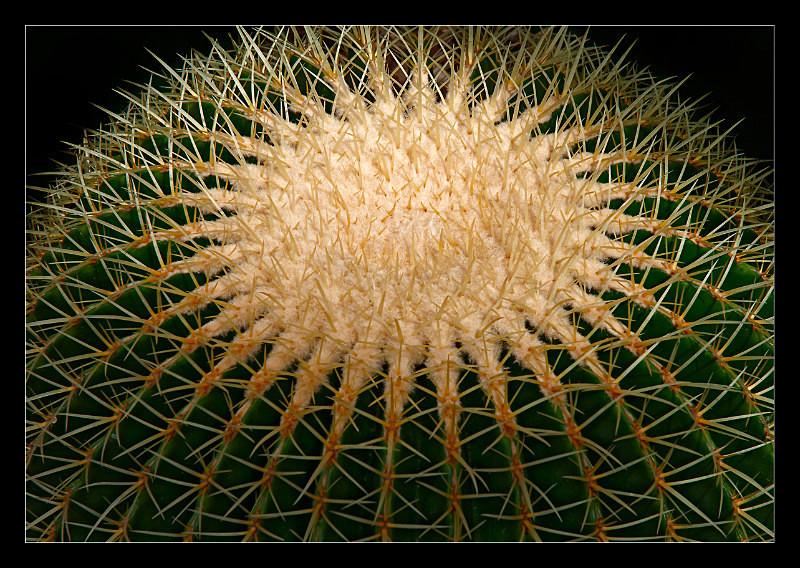 Cactus Planet - Nature