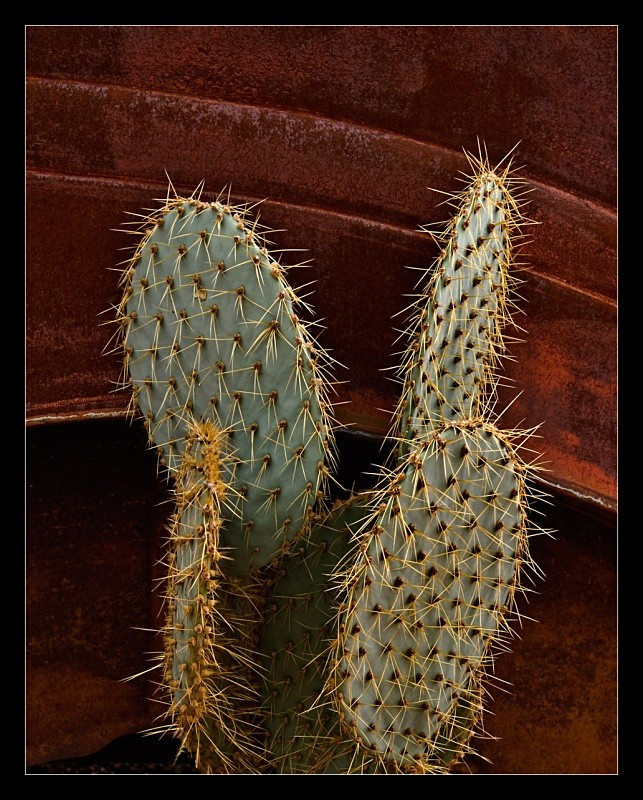Cactus and Rust - Vehicles