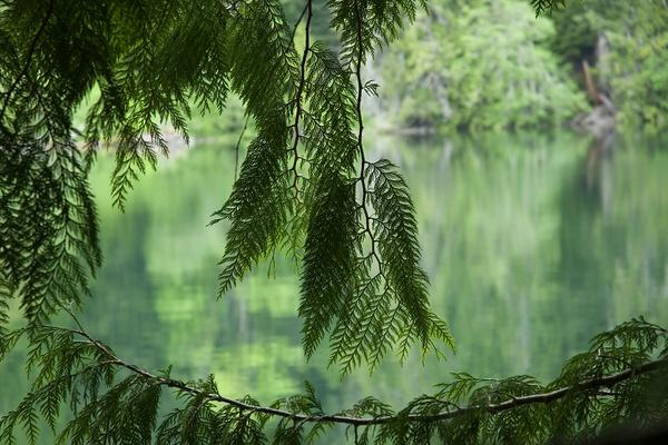 Cedar view - Canada