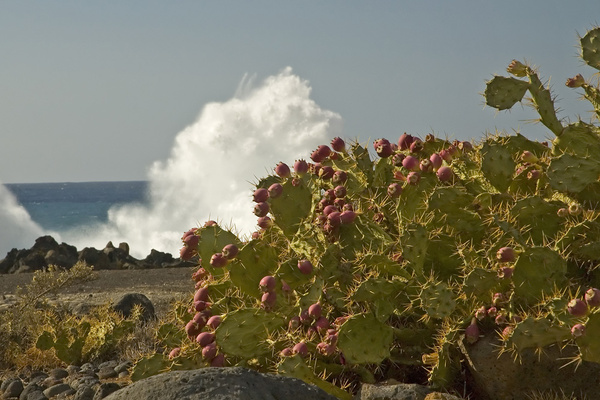 Cactii and waves. - Impressions of Tenerife
