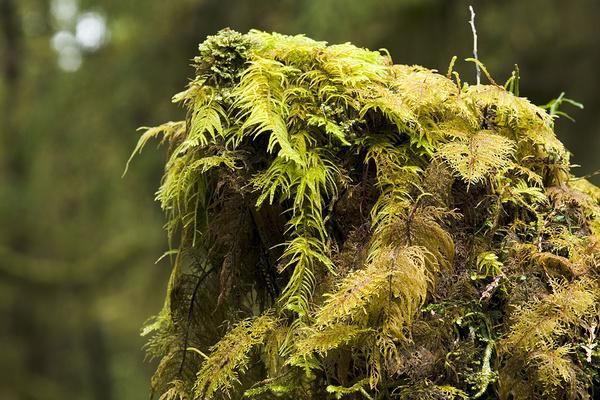 Mossy trunk... - Canada