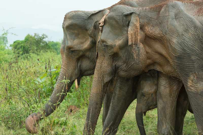 Three generations - Sri Lanka, wonderful wildlife experience.