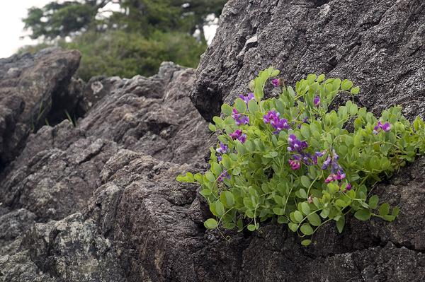 Rocky plant - Canada