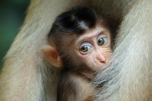 Eye-to-eye... - Malaysian Borneo.