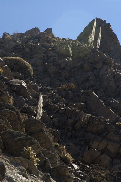 Spiky skeletons... - Impressions of Tenerife