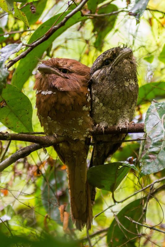 - Sri Lanka, wonderful wildlife experience.