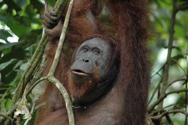 Let me pose for you... - Malaysian Borneo.