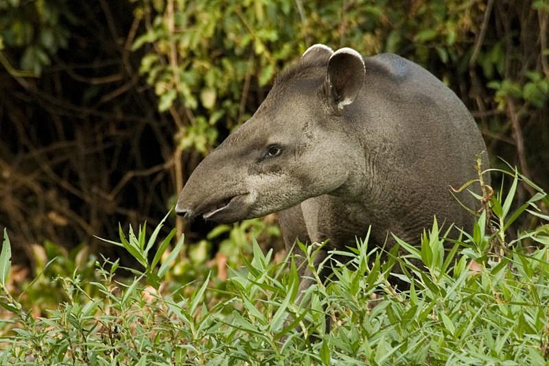 - Pristine Pantanal, Brasil