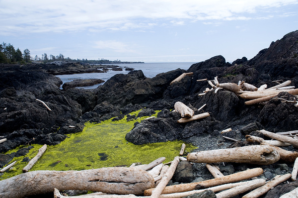Driftwood - Canada