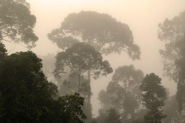 Lungs of the world... - Malaysian Borneo.