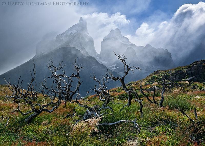 Renewal - Torres del Paine - Torres del Paine National Park