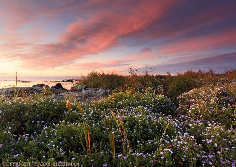 Seapoint Surprise I - Maine Coast & Mountains