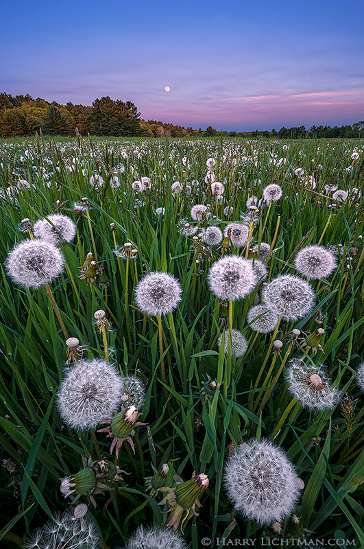 In the Weeds - New Hampshire Seacoast