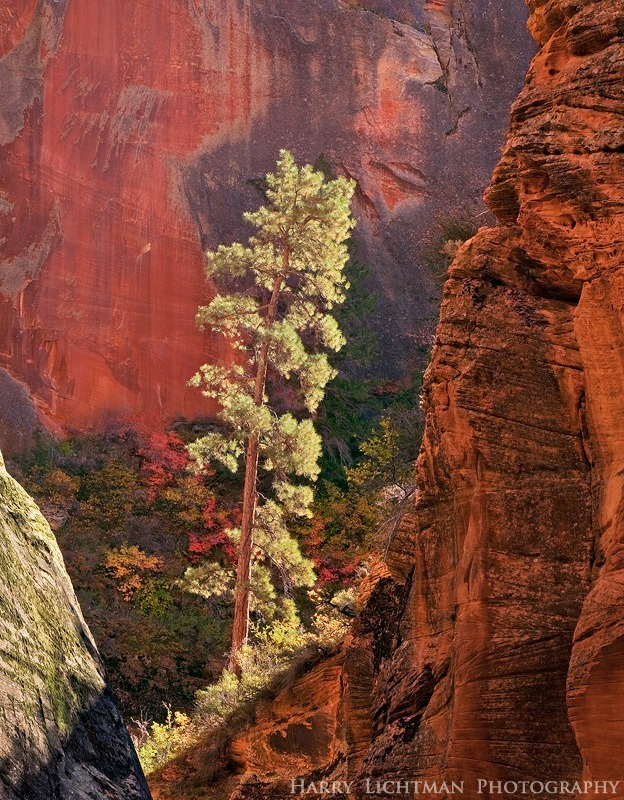 Lone Pine Canyon - Zion National Park