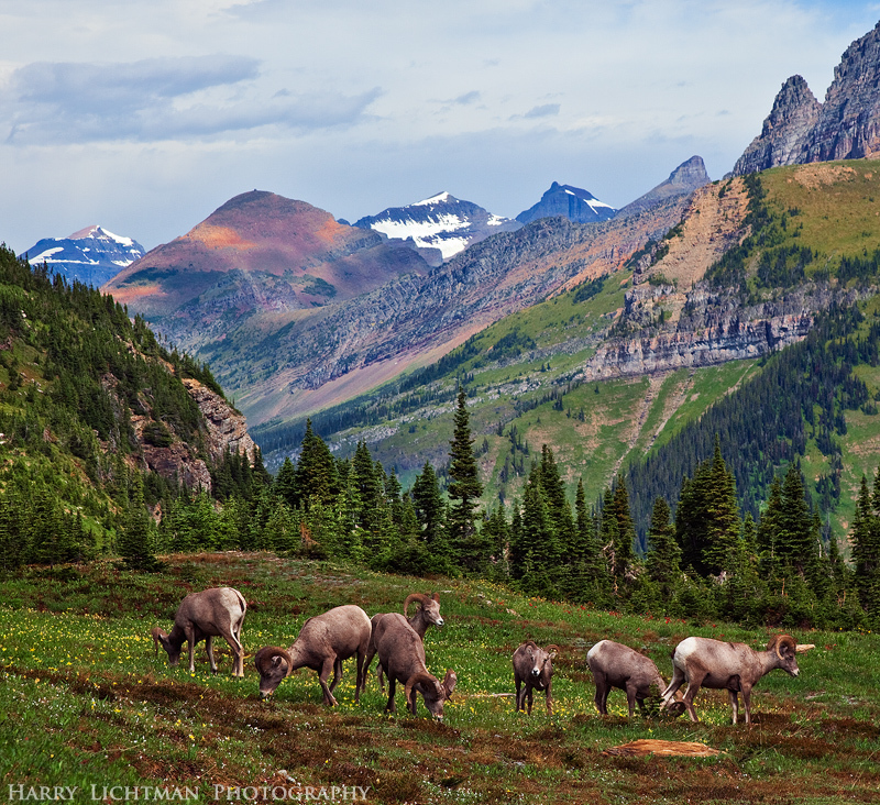 Lunch Break - Logan Pass - Glacier National Park