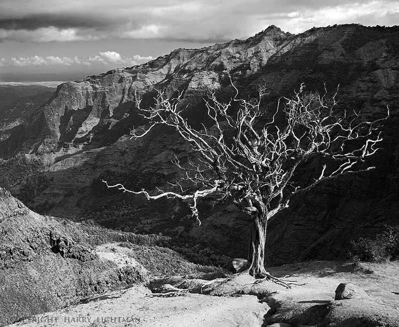 Canyon Sentinel  - Waimea Canyon - Black & White