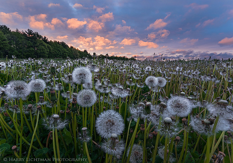 Field of Dreams - New Hampshire Seacoast