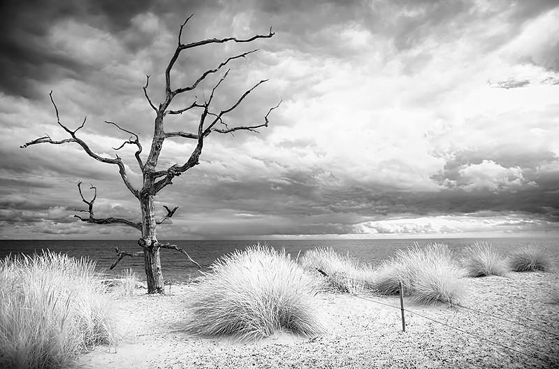 Lifeless - Norfolk Coast
