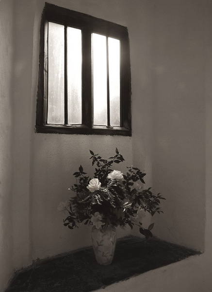 Daffodils - Window light