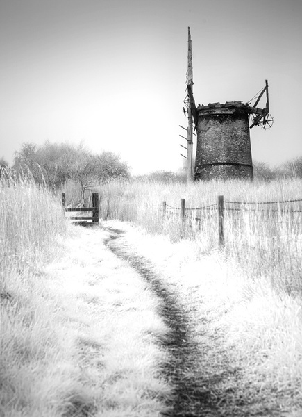 Sheltered Path - The Norfolk Broads