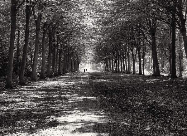 Afternoon Stroll - Retired negatives
