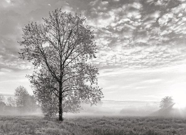 October mist - Norwich & Norfolk