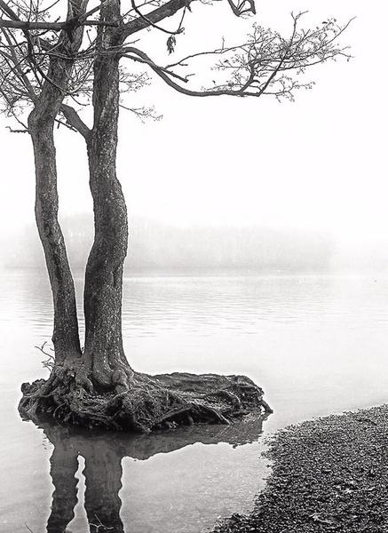 Solitude - The Norfolk Broads