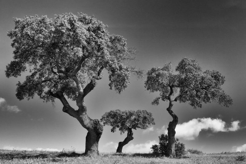 Steppe Trees x3 - Plants / Flora