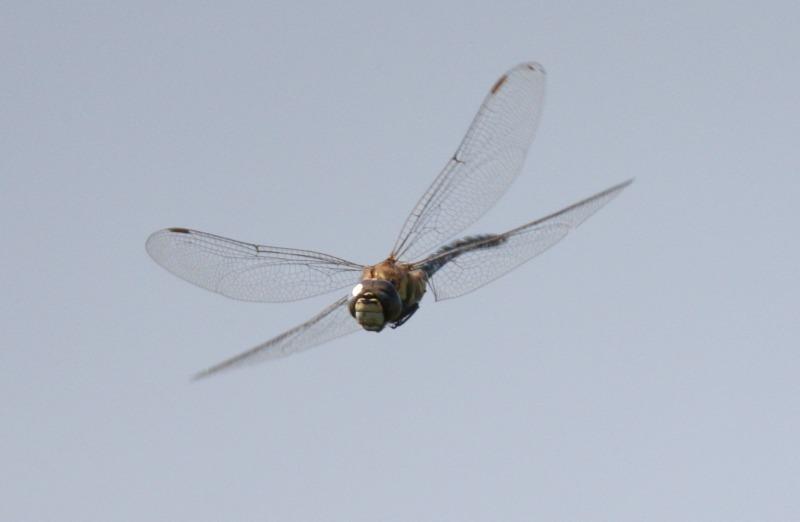 7W8P1849 - Wildlife